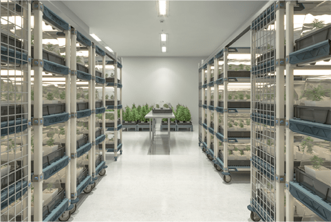 medical marijuana storage systems