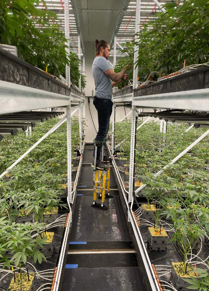 Mobile Shelving Cannabis Grow System