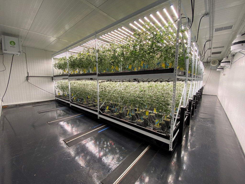 Best Shelving for Growing Weed
