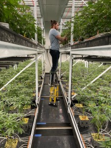 Shelving for Growing Weed
